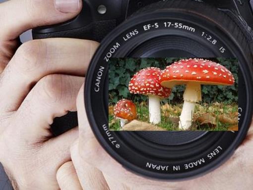 Concurso Fotografia Micologica