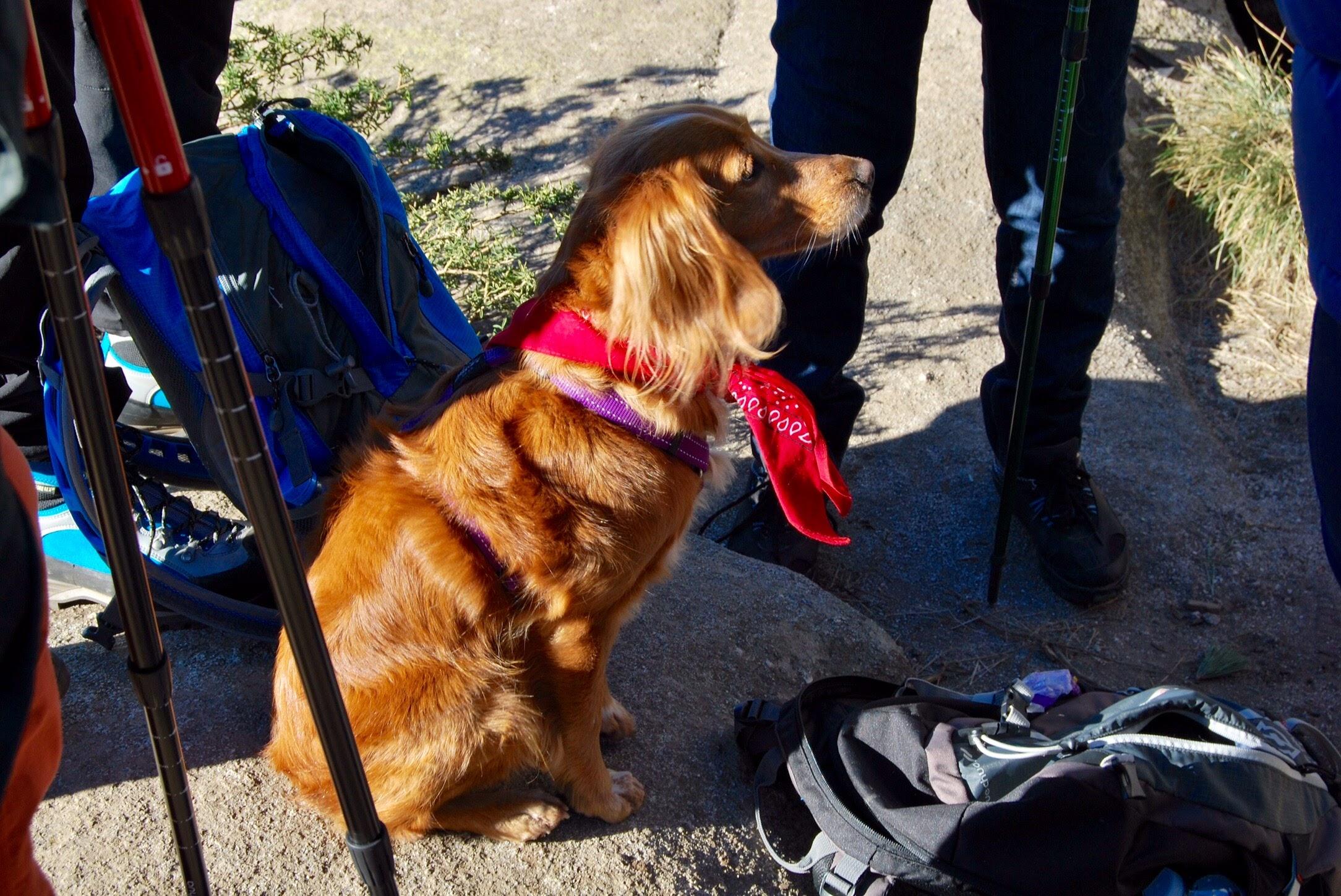 Ruta con perros